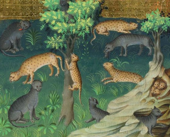 Lynx and wildcat, painted circa 1407 in Paris. Gaston Phoebus, Le Livre de la chasse, Morgan, MS M. 1044, fol. 27r.